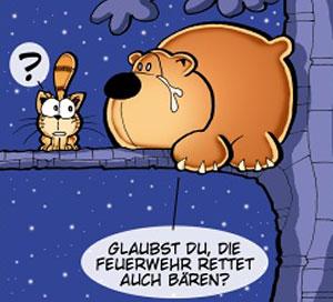baer_katze_teaser_hofmann
